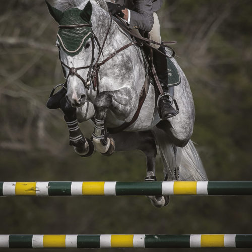 cheval-sport